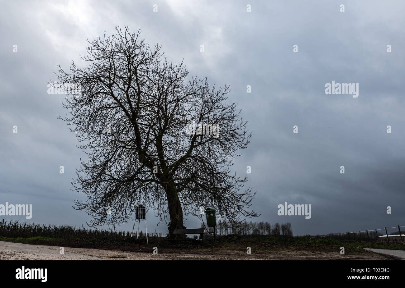Lonely bare tree and empty Farmland with dark blue rainclouds in the background Stock Photo