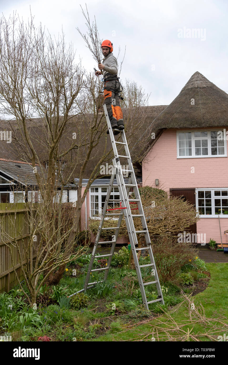 Micheldever Winchester Hampshire England Uk March 2019 Tree Surgeon Trimming A Tree From An Extendable Ladder Stock Photo Alamy