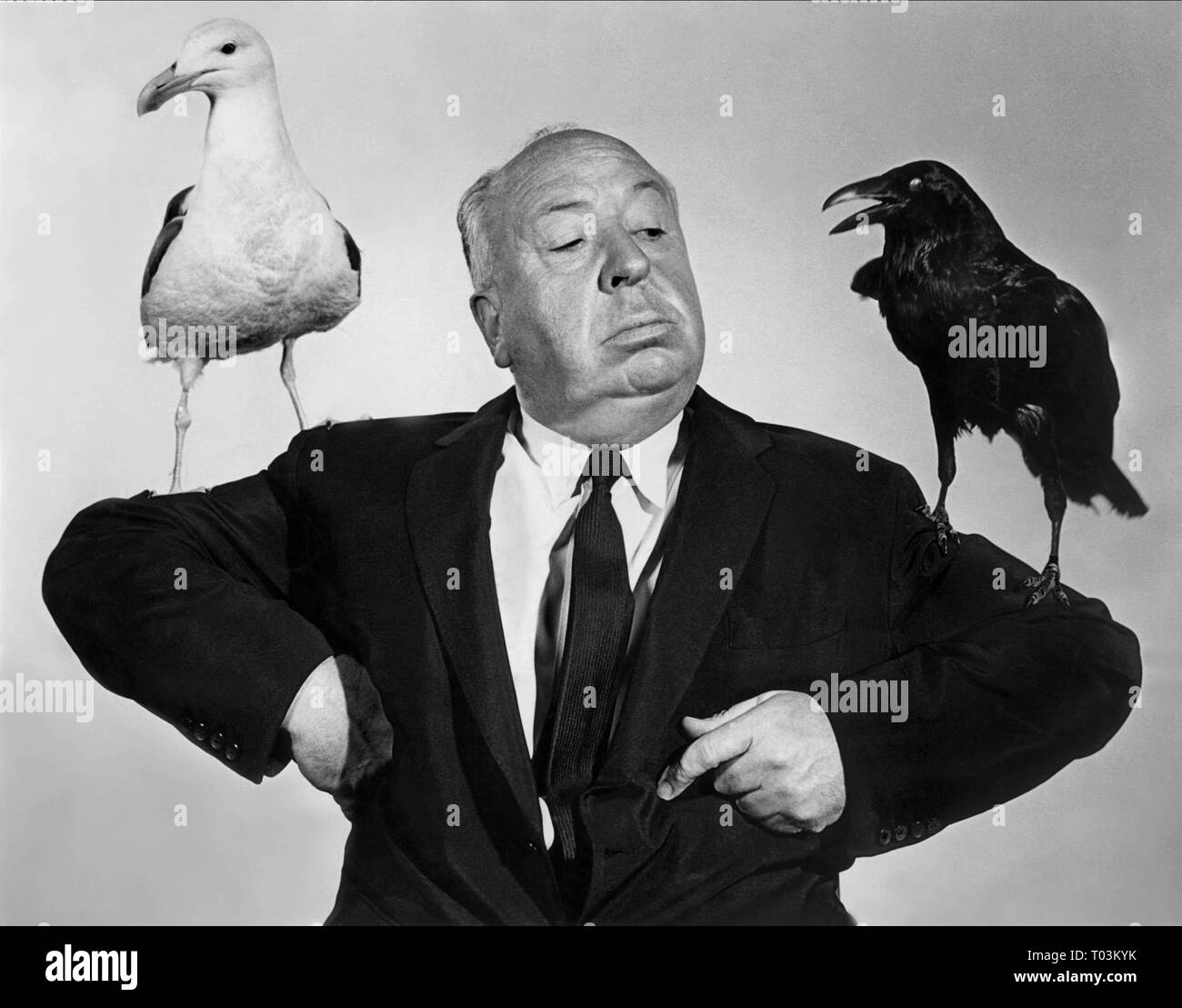 ALFRED HITCHCOCK, CROW, SEAGULL PUBLICITY SHOT, THE BIRDS, 1963 Stock Photo