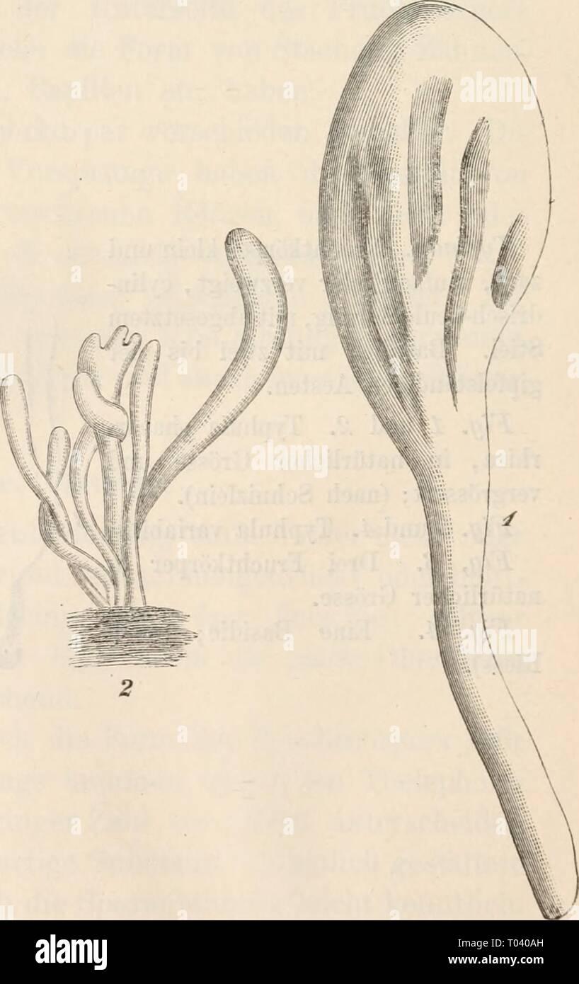 Dr. L. Rabenhorst's Kryptogamen-Flora von Deutschland, Oesterreich und der Schweiz . drlrabenhorstskr0101rabe Year: 1884 Stock Photo