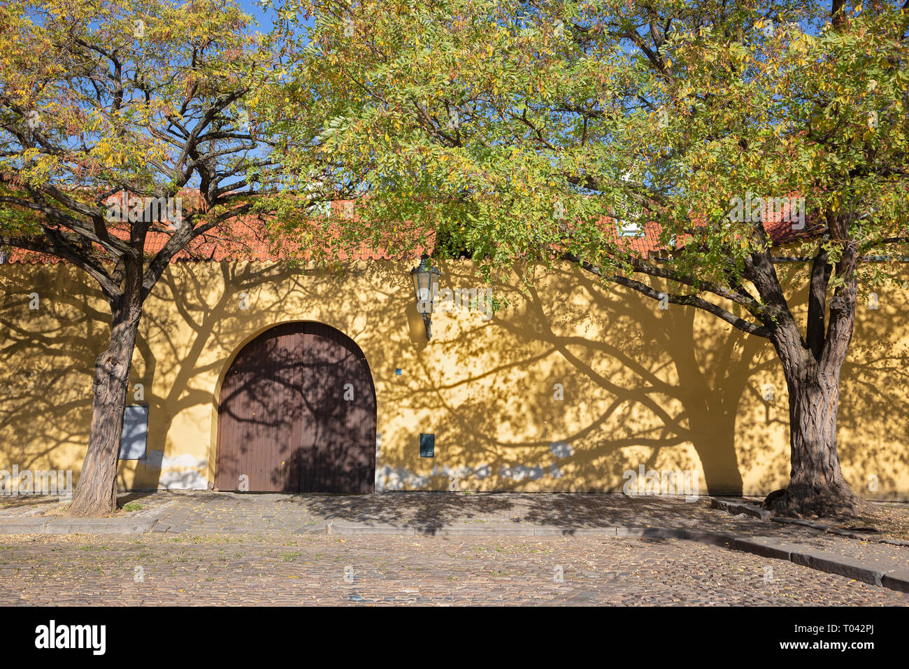 Prague - The acacias for the wall of Capuchins cloister. - Stock Image