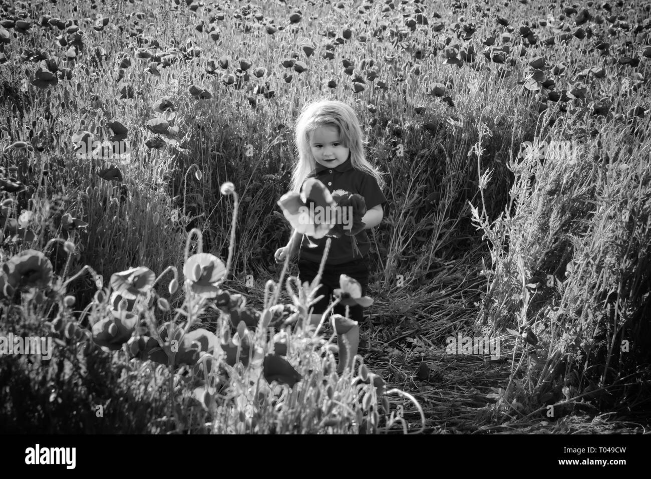 cute little boy on poppy field in hot summers - Stock Image