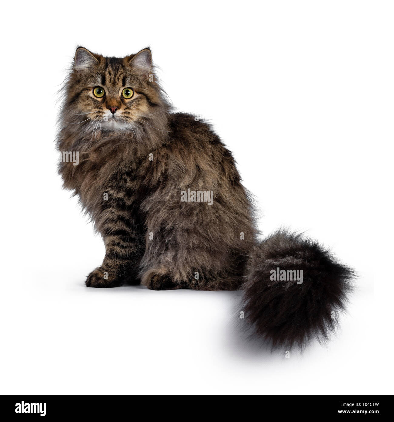 87b37c0293 Cat Looking Down Stock Photos   Cat Looking Down Stock Images - Page ...