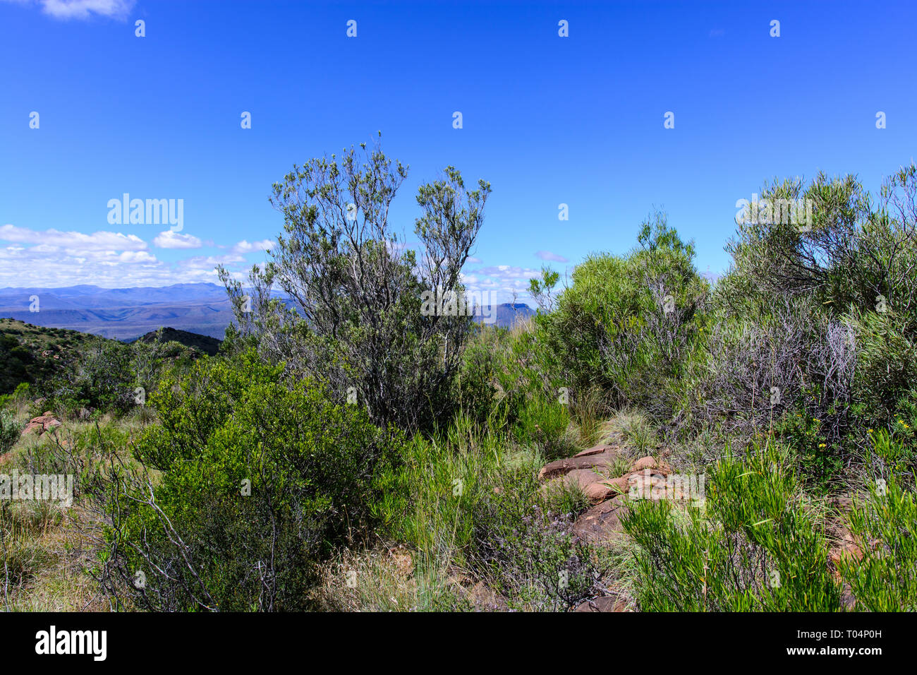 South Africa,Graaff-Reinet,Valley of Desolation,Karoo,Camdeboo, outdoor nature landscape panorama,blue sky,clouds, mountains on the horizon - Stock Image