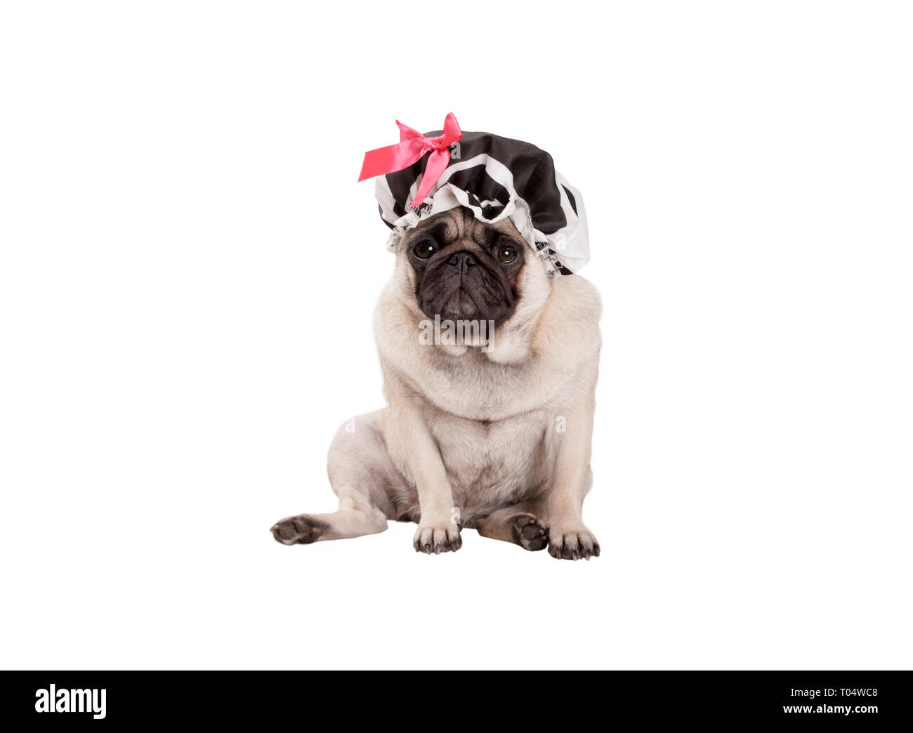 unhappy pug puppy dog with shower cap, sitting down, ready for taking a bath, isolated on white background Stock Photo