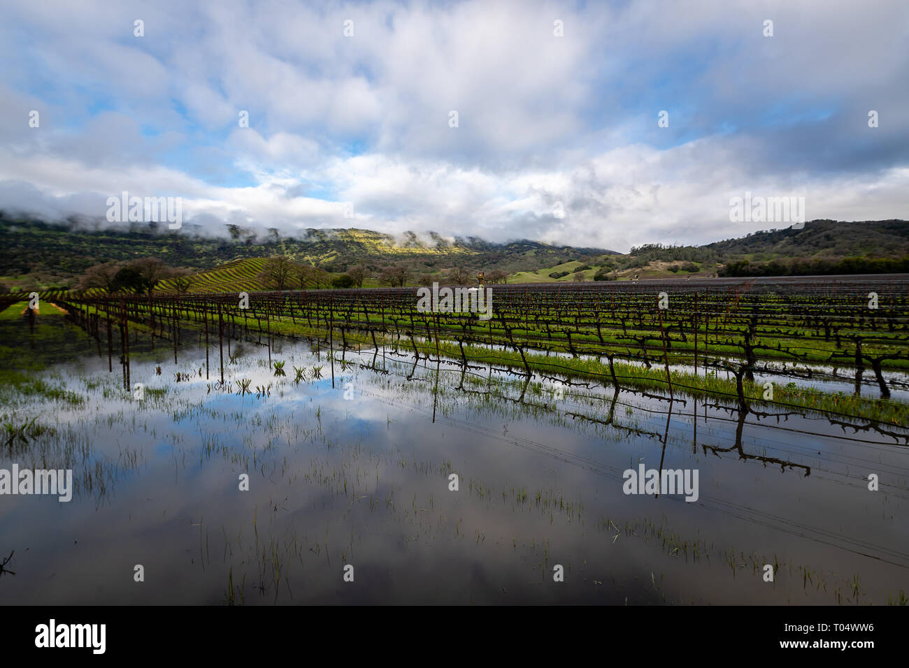 Reflections in the vineyards - Stock Image