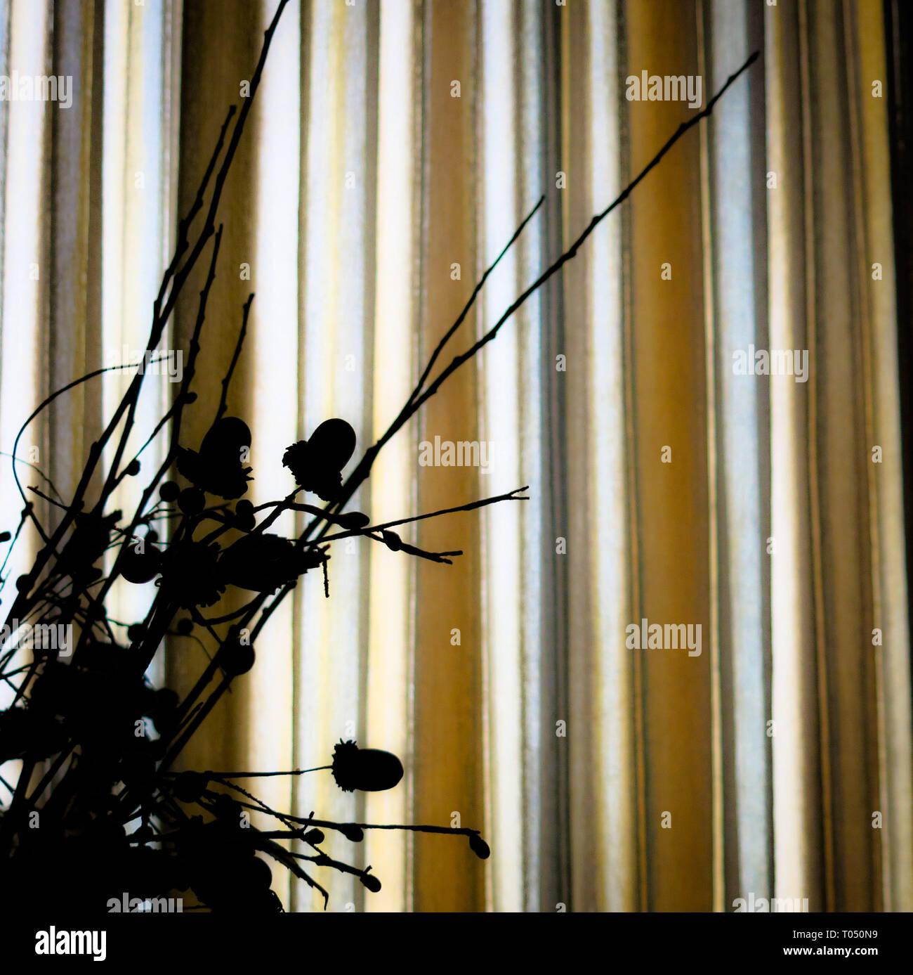 Dried ornamental plants against an illuminated curtain. - Stock Image