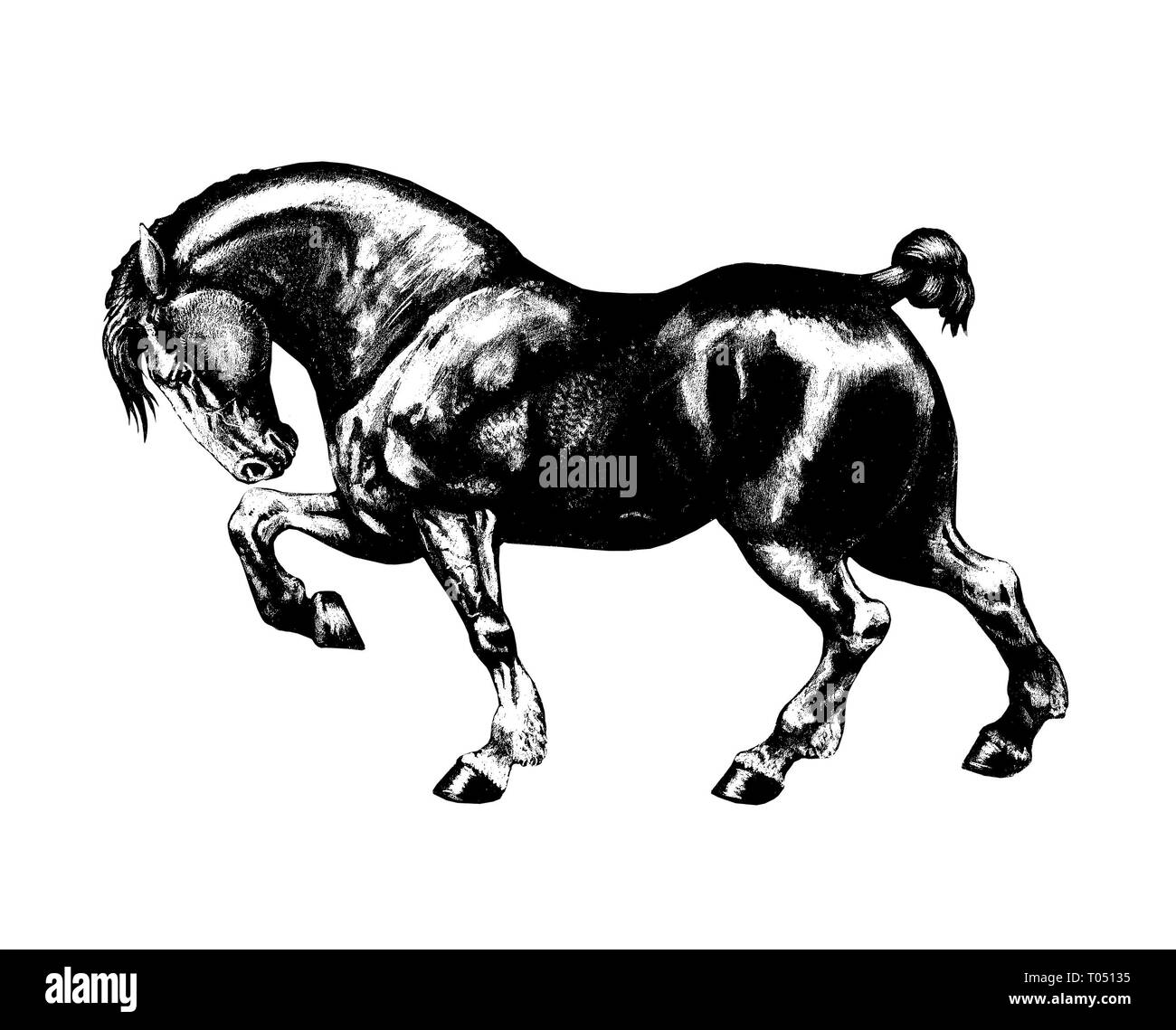 Draft Horse Illustration Strong Horse Drawing Portrait Stock Photo Alamy