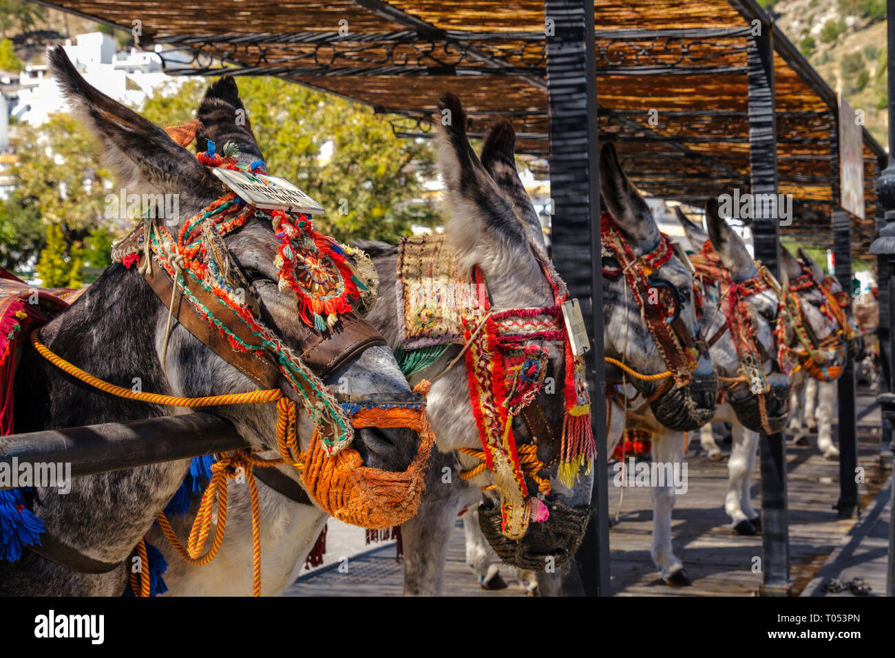 Famous donkey taxi. Attraction for visitors, typical white village of Mijas. Costa del Sol, Málaga province. Andalusia, Southern Spain Europe - Stock Image