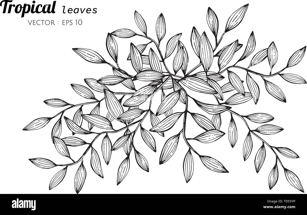Tropical Leaves Clip Art Black And White Stock Photos Images Alamy Tropical leaves frame free vector and png. https www alamy com tropical leaves drawing illustration for pattern logo template banner posters invitation and greeting card design image241059610 html