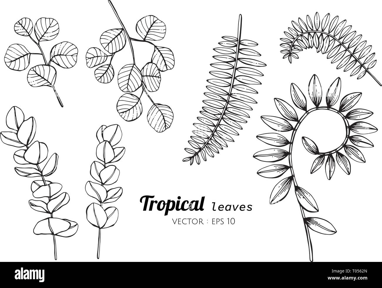 Collection set of Tropical leaves drawing illustration. for pattern, logo, template, banner, posters, invitation and greeting card design. - Stock Image