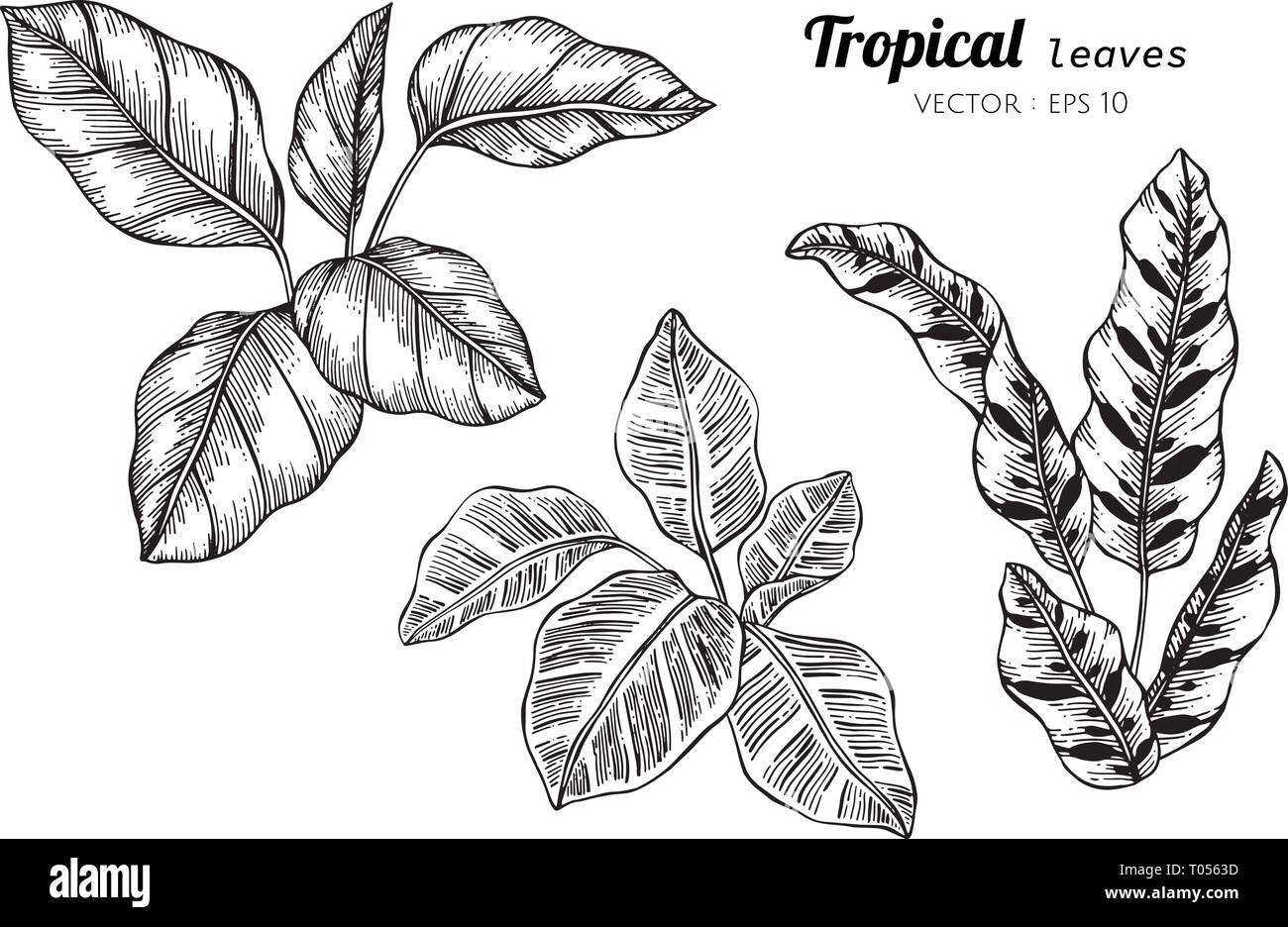 Collection Set Of Tropical Leaves Drawing Illustration For Pattern Logo Template Banner Posters Invitation And Greeting Card Design Stock Vector Image Art Alamy This high energy tropical flower painting, titled tropicana will jazz up any decor. https www alamy com collection set of tropical leaves drawing illustration for pattern logo template banner posters invitation and greeting card design image241059713 html