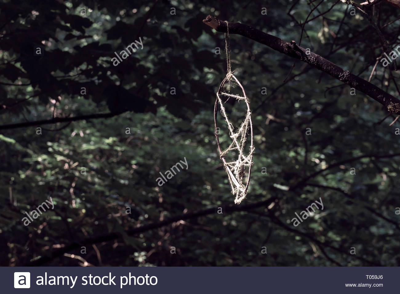 ecfbe907ee6 A curious object left hanging from a tree in a forest. - Stock Image