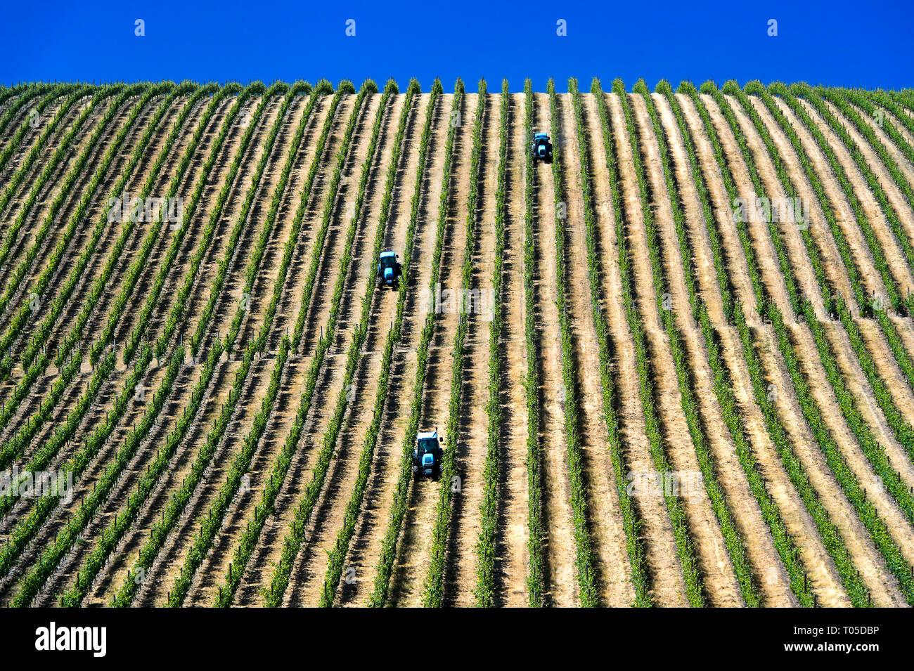 Mechanized fieldwork with tractor in Vineyard with vertical vine rows, Vinha ao alto technique, Sao Joao de Pesqueira, Douro Valley, Portugal - Stock Image