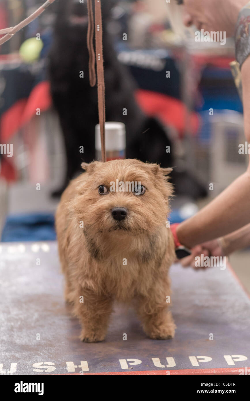 Akc Dog Show Stock Photos & Akc Dog Show Stock Images - Page 3 - Alamy