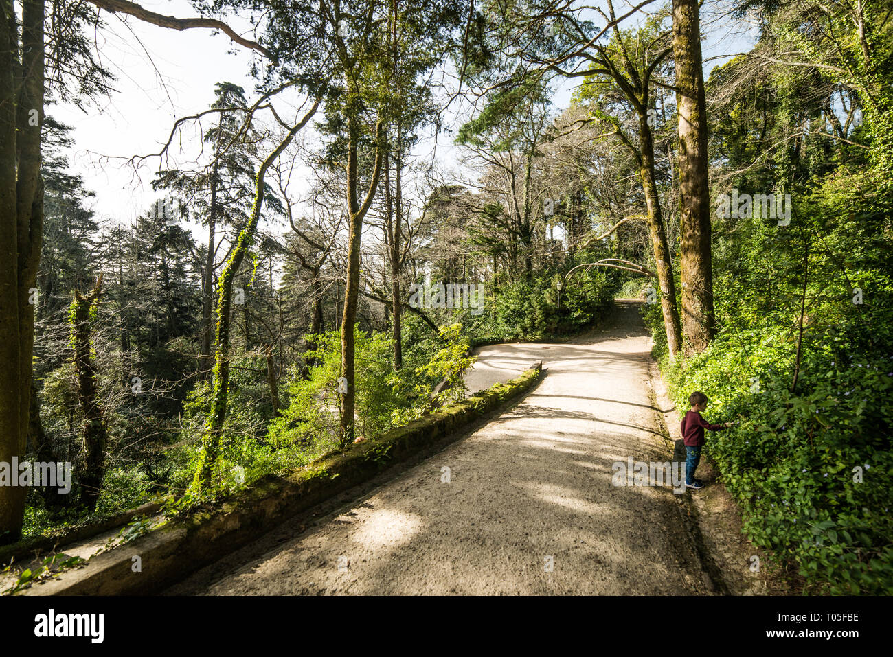 Sintra castle and park, Lisboa, February 2019 - Stock Image