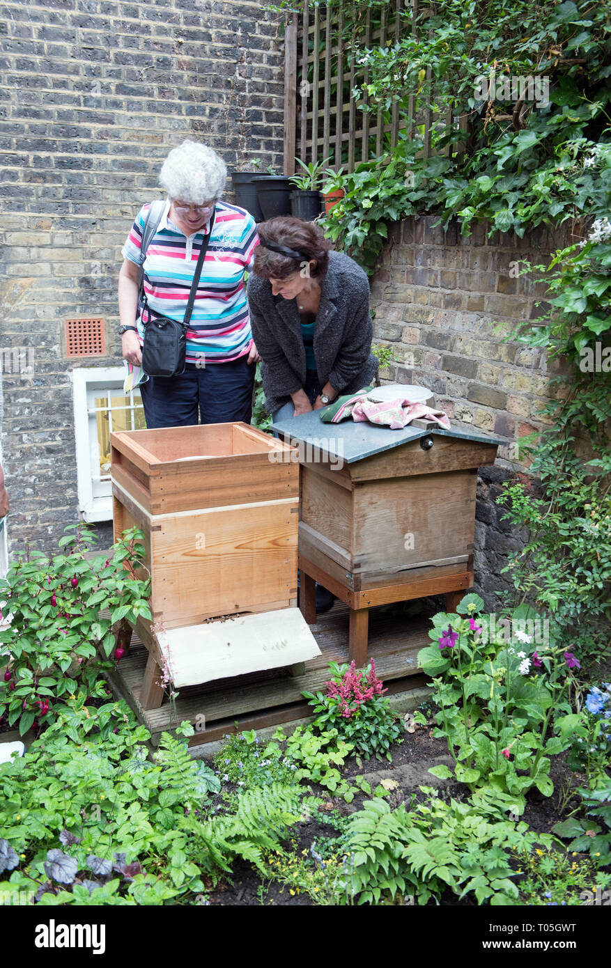 Ladies looking at bee hives, Melissa Garden Bee Sanctuary with bee friendly plants in foreground, Compton Terrace, London Borough of Islington - Stock Image