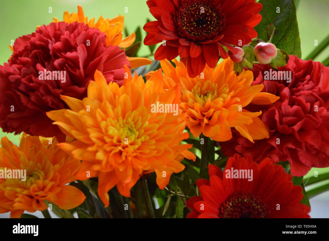 Flowers except one butterfly - Stock Image