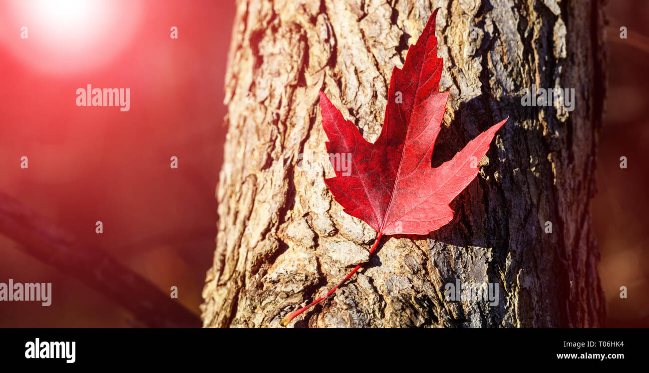 Page 2 Canadian Flag Wallpaper Background High Resolution Stock Photography And Images Alamy