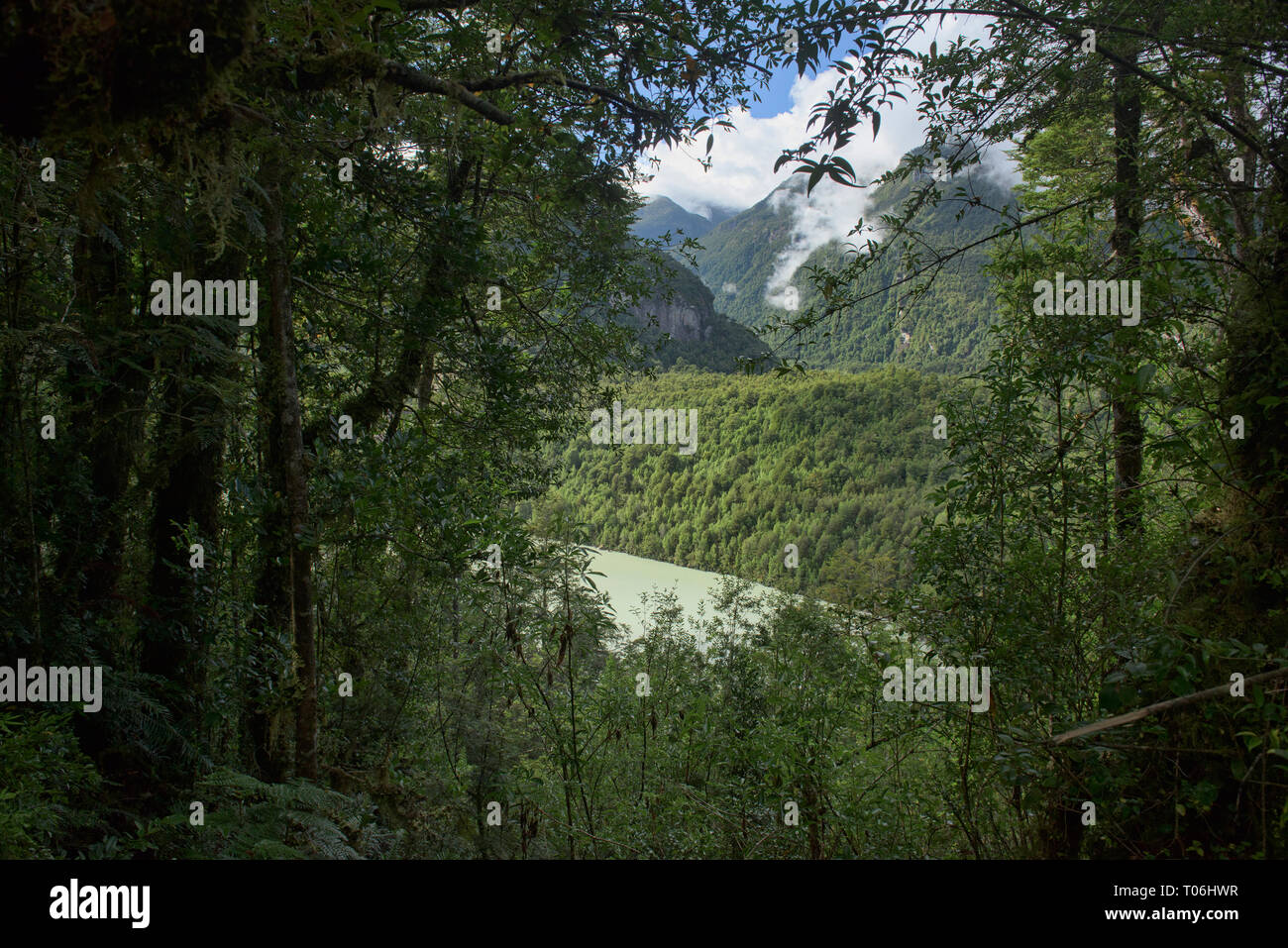 Forest view of Laguna Tempanos in Queulat National Park, Patagonia, Aysen, Chile - Stock Image