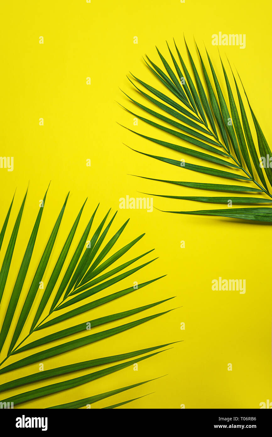 Tropical Green Palm Leaves On Yellow Background Stock Photo Alamy Download free vector of blank tropical yellow background vector by peera about flamingo, flyer, hornbill, invitation card and pink flamingo 679906. alamy