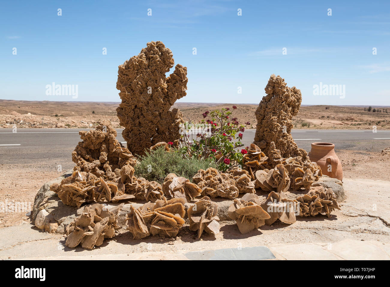 Large desert rose stone formation and rose flowers in the flower bed next to the road in the Tunisian desert. - Stock Image