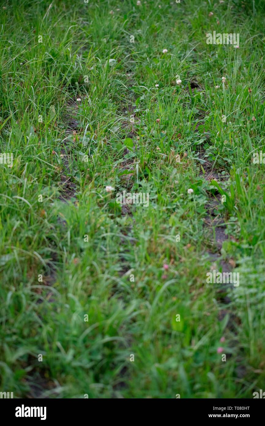 slurry on field, Bavaria, Germany, Europe - Stock Image