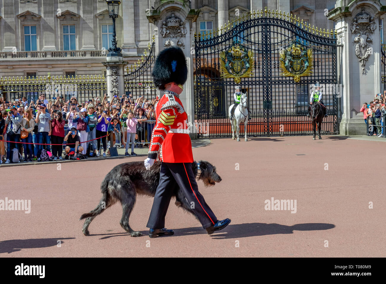 Queen's Guards, Maskottchen Irish Wolfshound, Changing of the guards, Buckingham Palace, London, England, Grossbritannien Stock Photo
