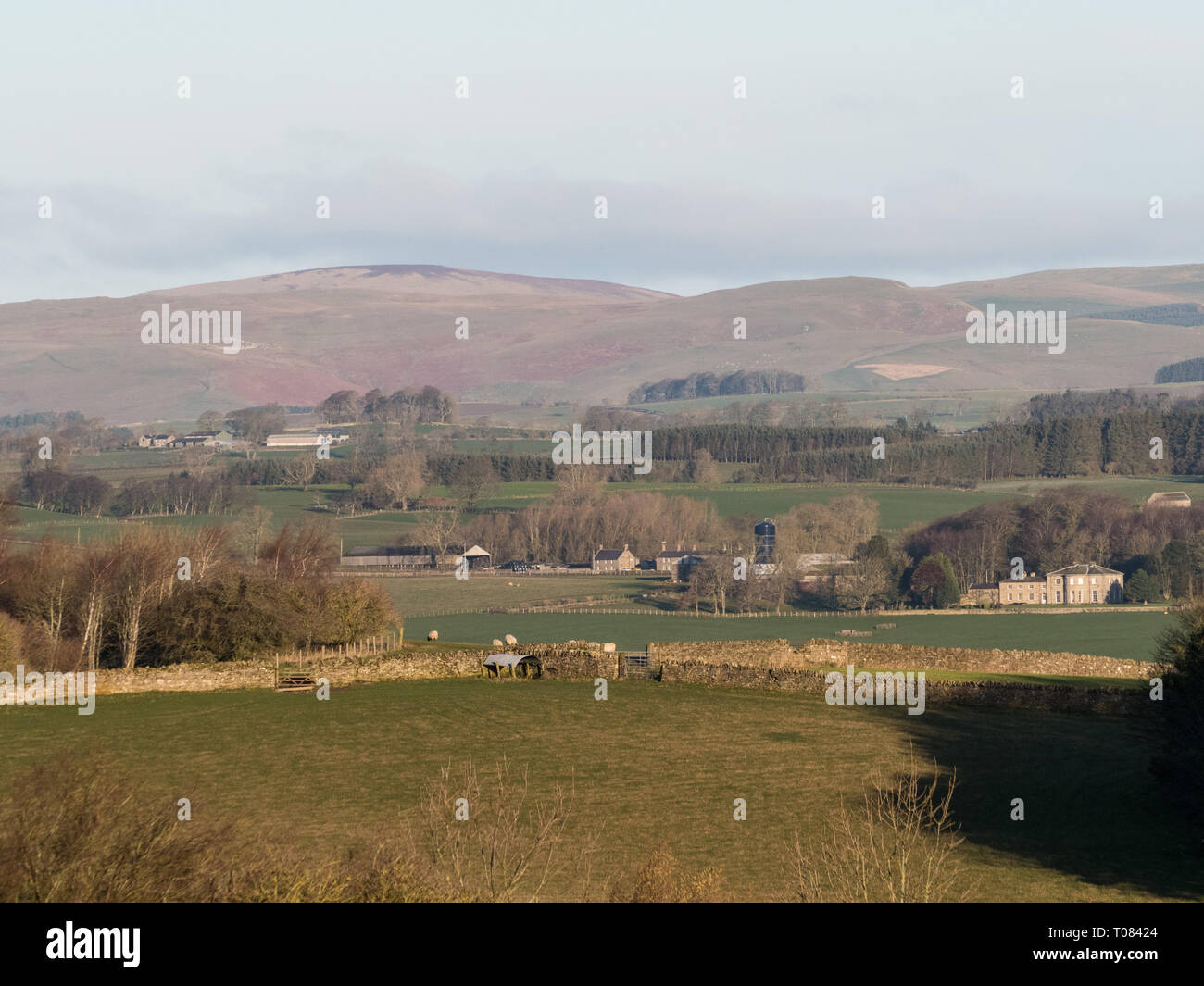 Landscape near Rothbury, Northumberland, looking north, early morning after sunrise, golden light - Stock Image