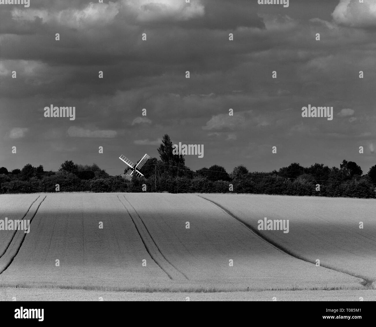 Bourn windmill and wheatfield Cambridgeshire England - Stock Image