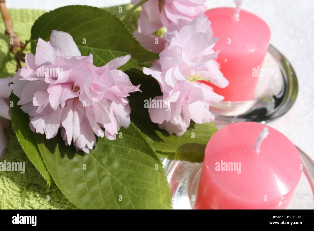 Cherry blossoms with candles Stock Photo