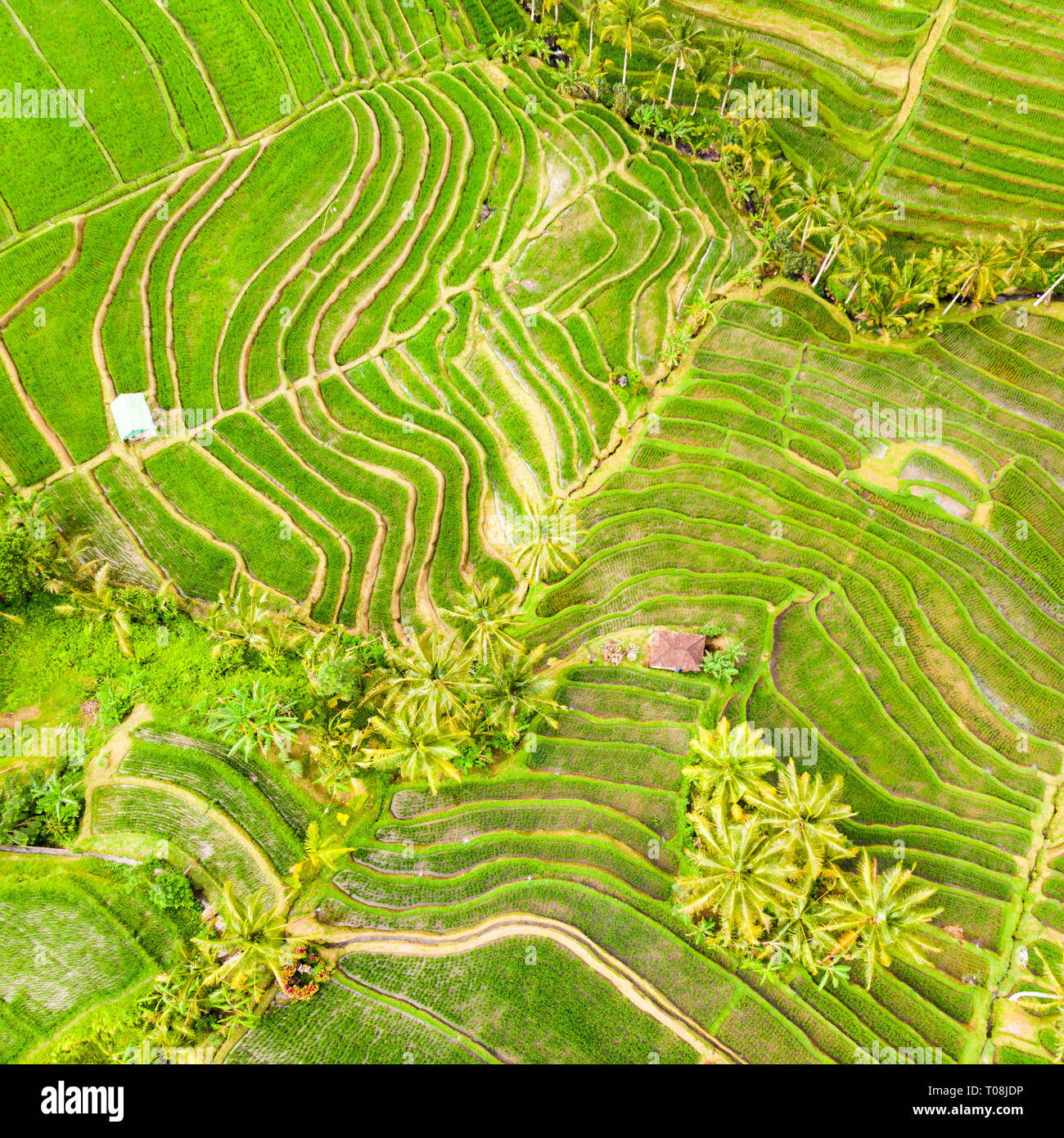Drone view of Jatiluwih rice terraces and plantation in Bali