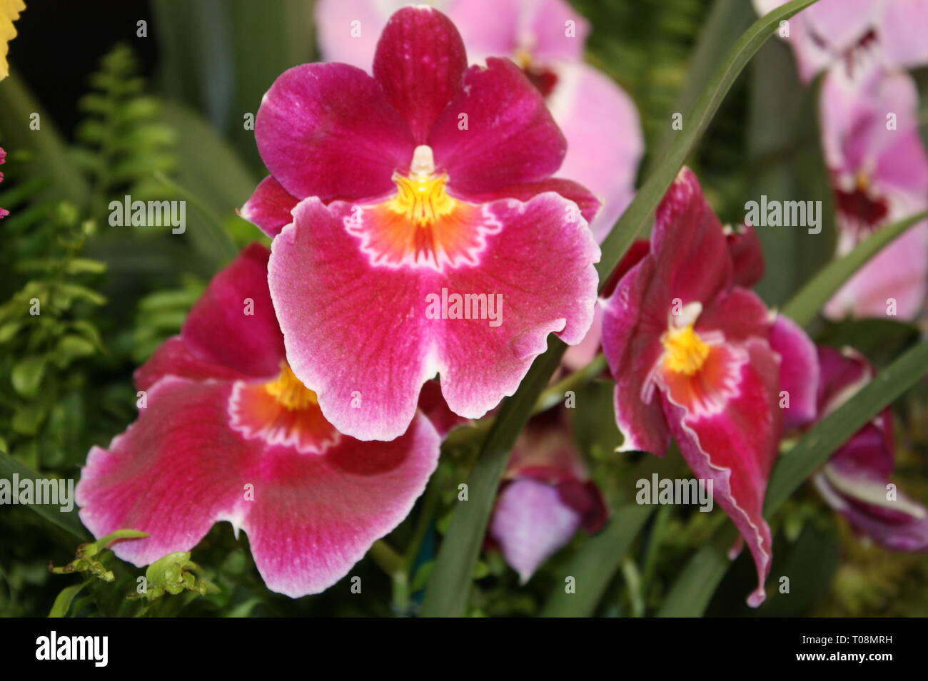 Tropical orchid flowers Stock Photo