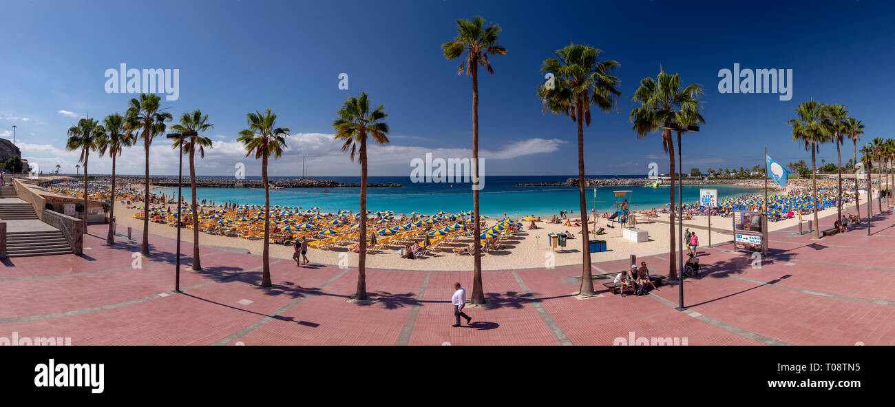 Holiday beach with palm trees at Amadores, Gran Canaria, Canary Islands - Stock Image