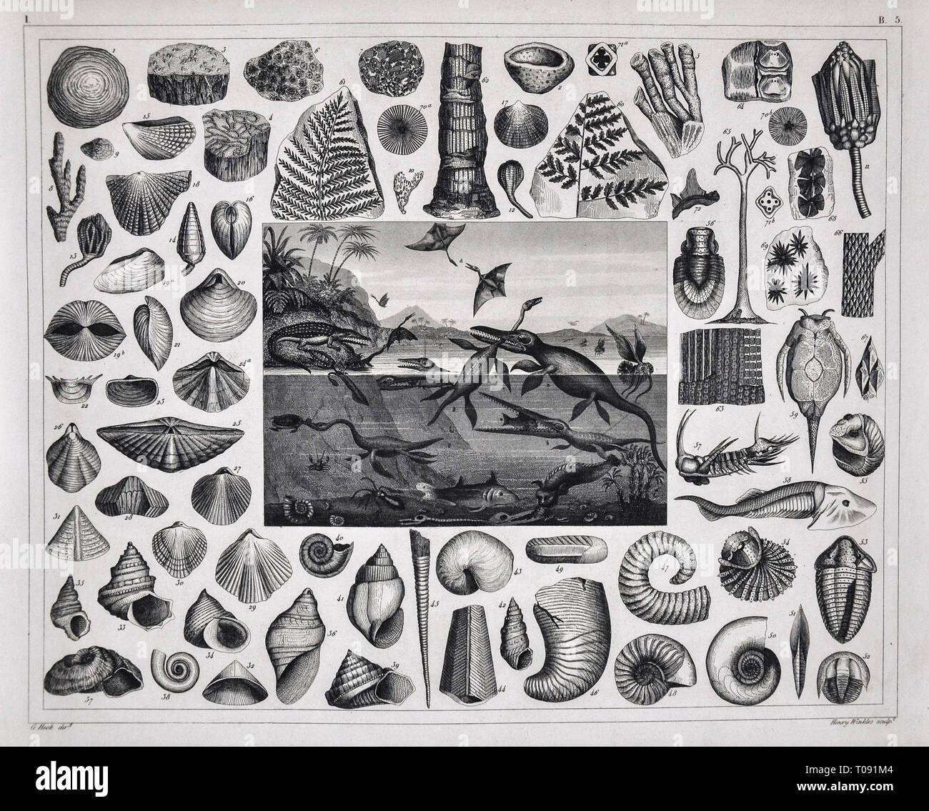 Pterodactyl Stock Photos & Pterodactyl Stock Images - Alamy