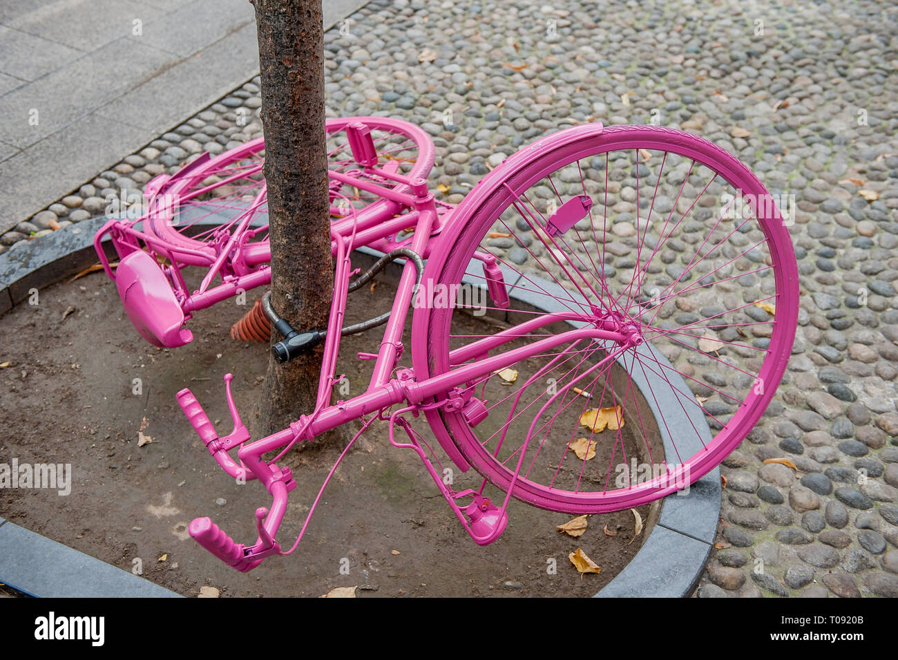 bicycle tied to a tree to avoid theft - Stock Image