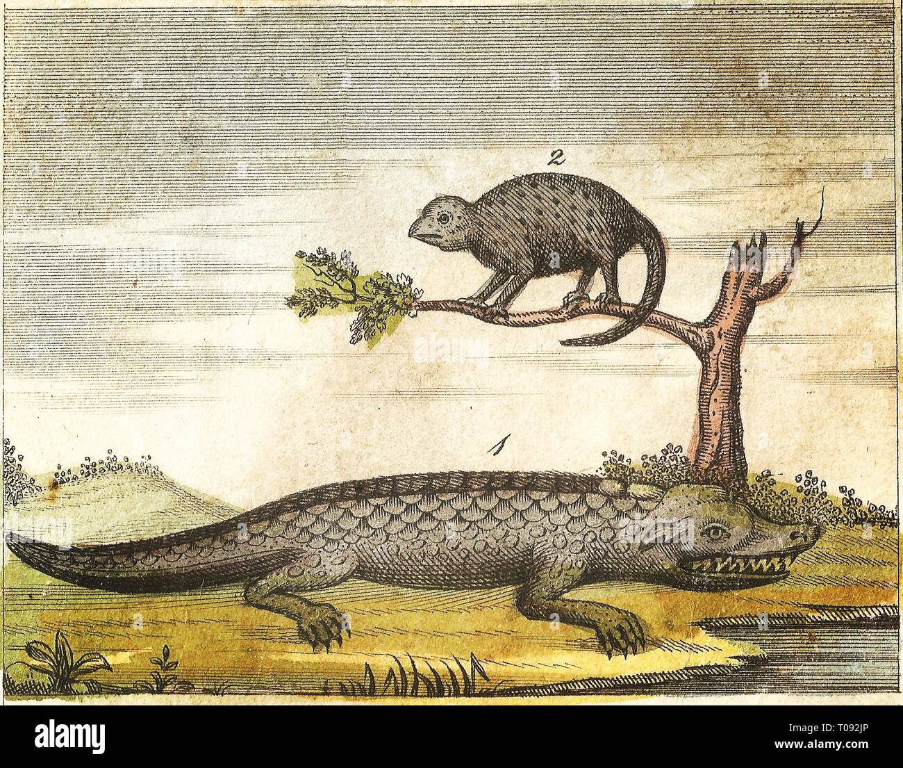 Crocodile and chameleon vintage engraved illustration with imperfections patina and original colors buffons natural history 1840