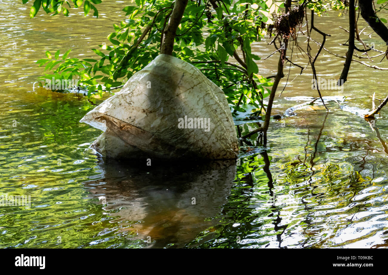 Decomposing Reinforced Plastic Sack Caught Up On Tree Branches Overhanging the River Torridge, Exposed at Low Summer Water. Great Torrington - Stock Image
