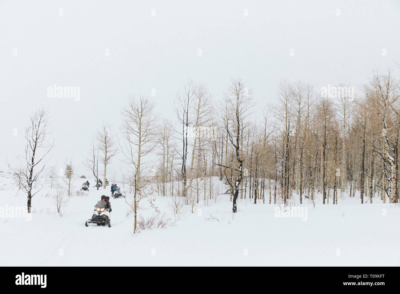 Snowmobiles in a grove of aspen trees. Vail, Colorado - Stock Image