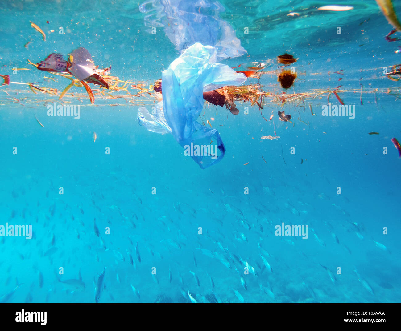 plastic bags are floating on surface of marine environment, which is major source of marine pollution Stock Photo
