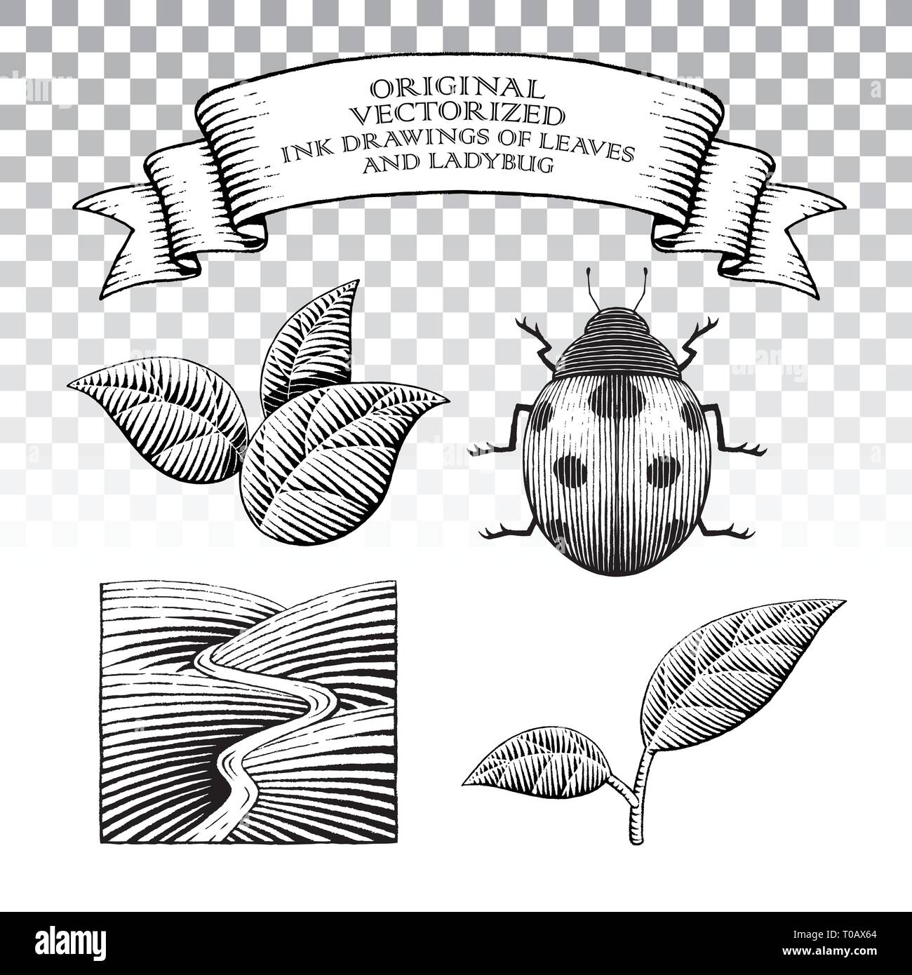Vector Illustration of Scratchboard Style Ink Drawings of Leaves and Ladybug - Stock Vector
