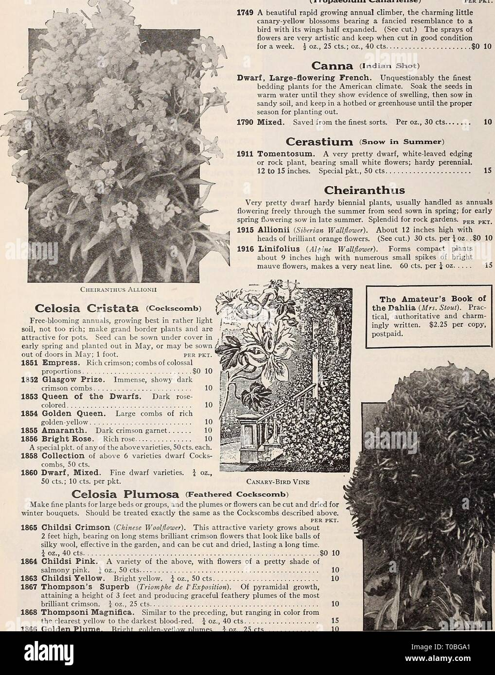 Dreer's garden book 1932 (1932) Dreer's garden book 1932 dreersgardenbook1932henr Year: 1932  kRE LIABLE FLOWER SEEDS;    Canary-bird Vine (Tropaeolum Canariense) per pkt. 1749 A beautiful rapid growing annual climber, the charming little canary-yellow blossoms bearing a fancied resemblance to a bird with its wings half expanded. (See cut.) The sprays of flowers are very artistic and keep when cut in good condition for a week.  oz., 25 cts.; oz., 40 cts $0 10 Canna (Indian Shot) Dwarf, Large-flowering French. Unquestionably the finest bedding plants for the American climate. Soak the seeds in - Stock Image