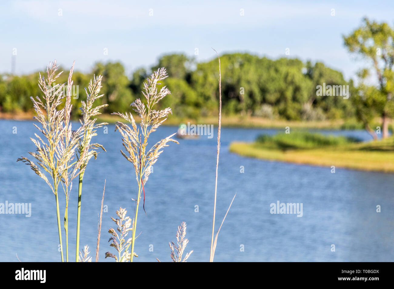 Barber County fishing lake - Stock Image