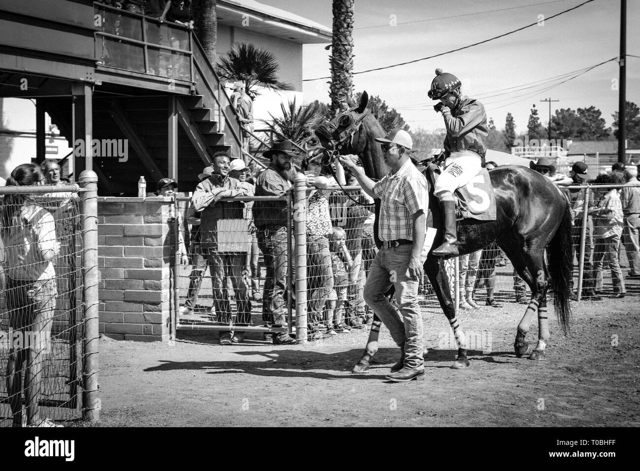 A Trainer Or Handler Escorts The Racehorse Around During The Pre Parade In The Paddock With The Jockey Mounted At The Rillito Race Track In Tucson Az