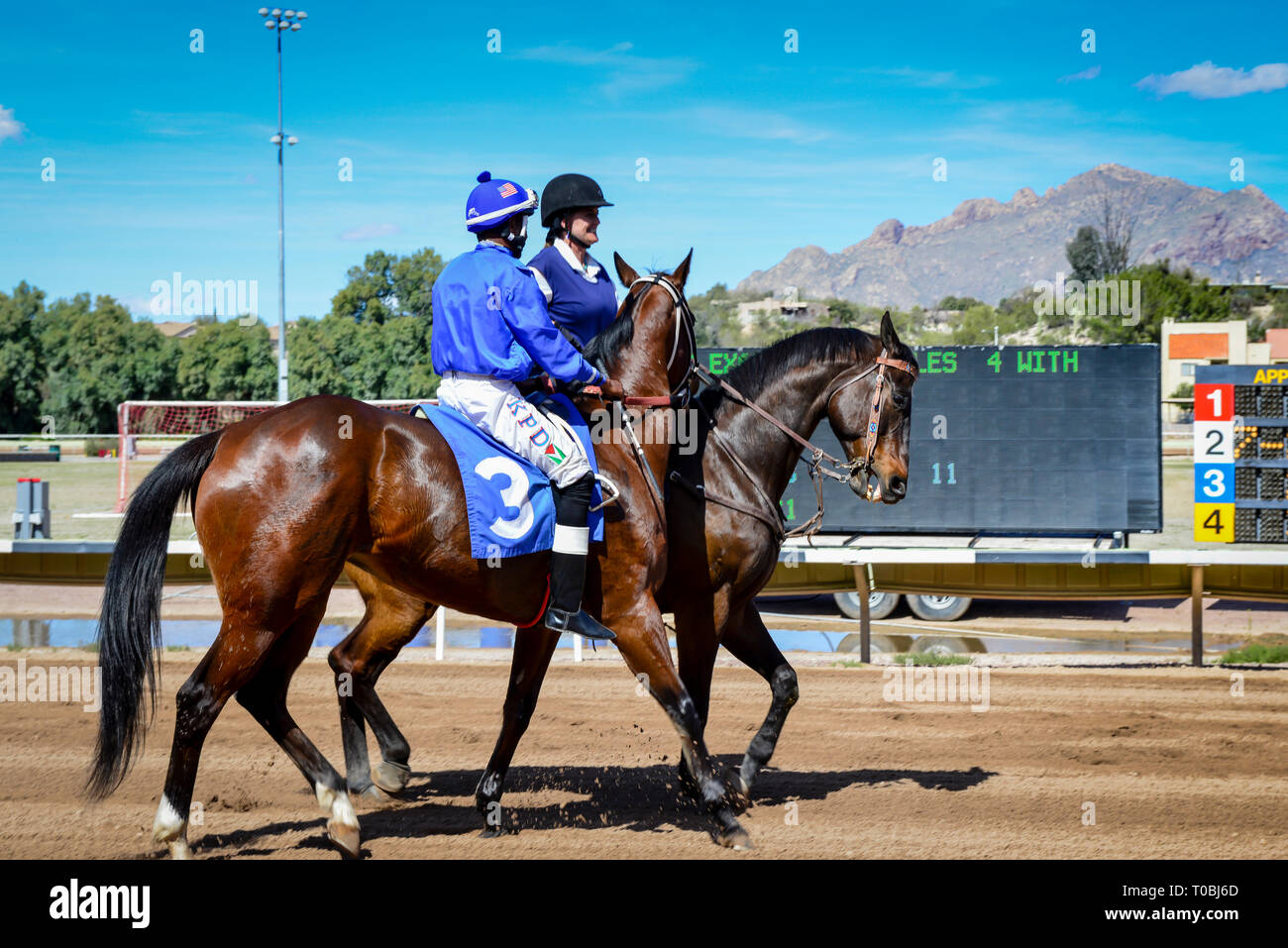 Race Horse And Jockey With Blue Silks Are Escorted By A Female Outrider On The Horse Racing Track At Rillito Park Race Track In Tucson Az Stock Photo Alamy