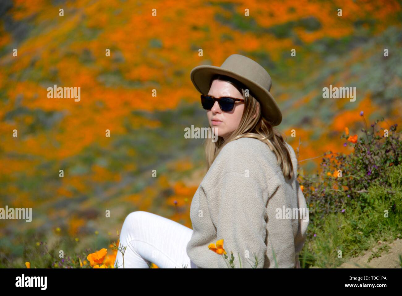 Super Bloom 2019. Woman disobeys the rules and sits on the golden poppies—crushing them—in her quest for photos at the now-closed Walker Canyon. - Stock Image
