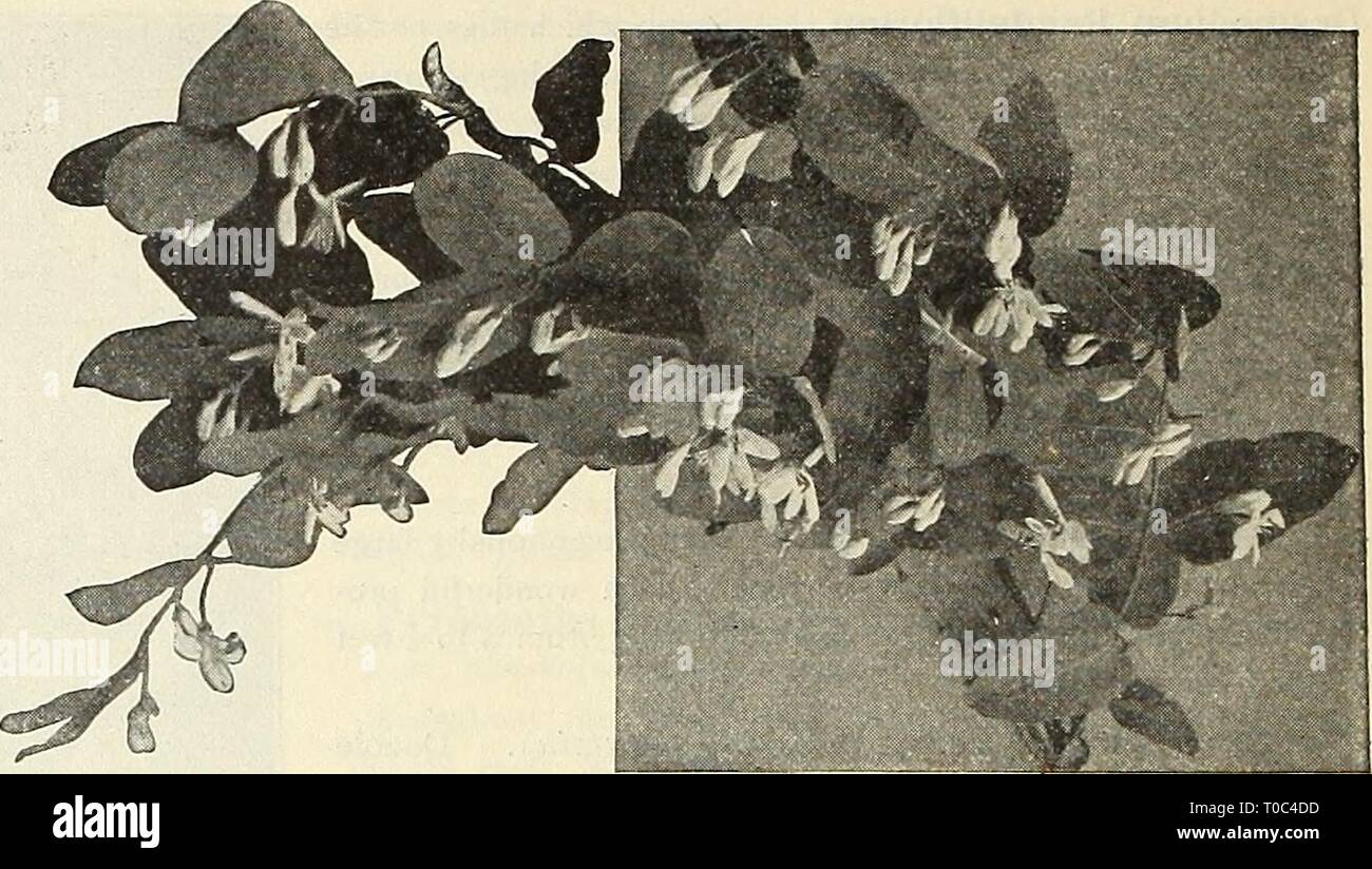 Dreer's garden book 1916 (1916) Dreer's garden book 1916
