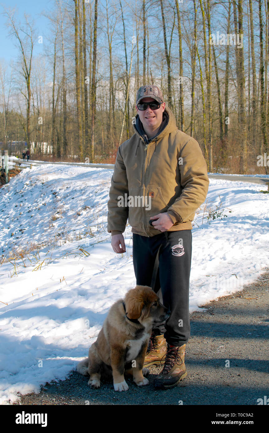 Tibetan Mastiff (Canis lupus familiaris) or Himalayan Mountain dog puppy sitting with his person on a snowy trail in Maple Ridge, B. C., Canada - Stock Image