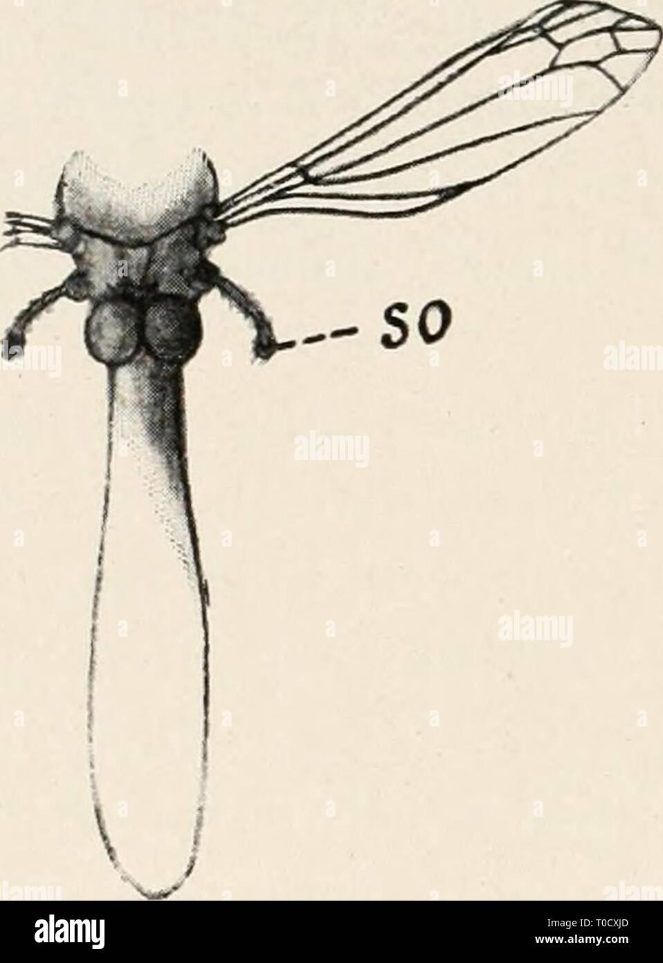 Einführung in die Biologie (1912) - Stock Image
