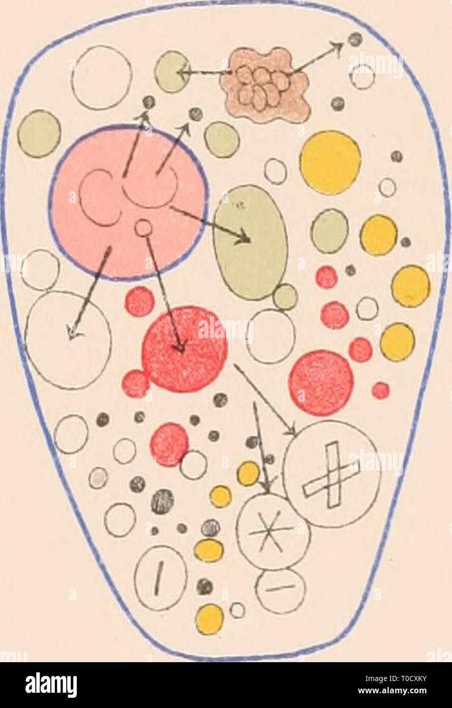 Dr HG Bronn's Klassen und Dr. H.G. Bronn's Klassen und Ordnungen des Thier-Reichs : wissenschaftlich dargestellt in Wort und Bild drhgbronnsklasse040102bron Year: 1912  D t) oO a Do 0^ <7 ^ ^ o- o 0 i^ : .0® o â ° n o °o Oo o    O *o:'-b#4y o o^- '5 clüi - Stock Image